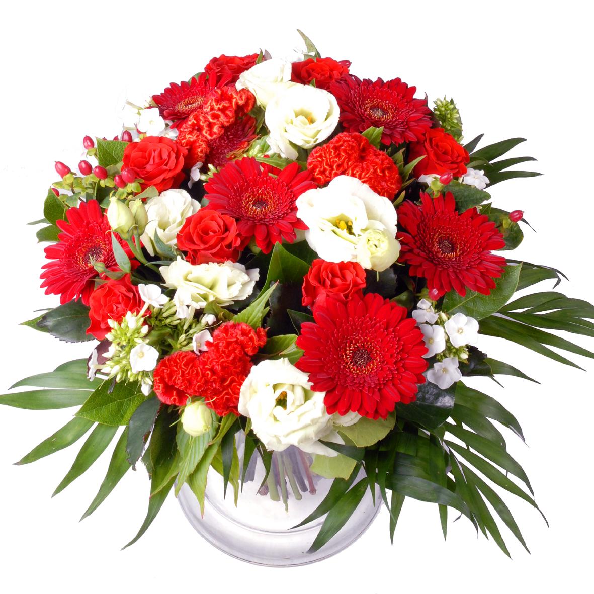 Planten Kerst bloemen Rood en Wit