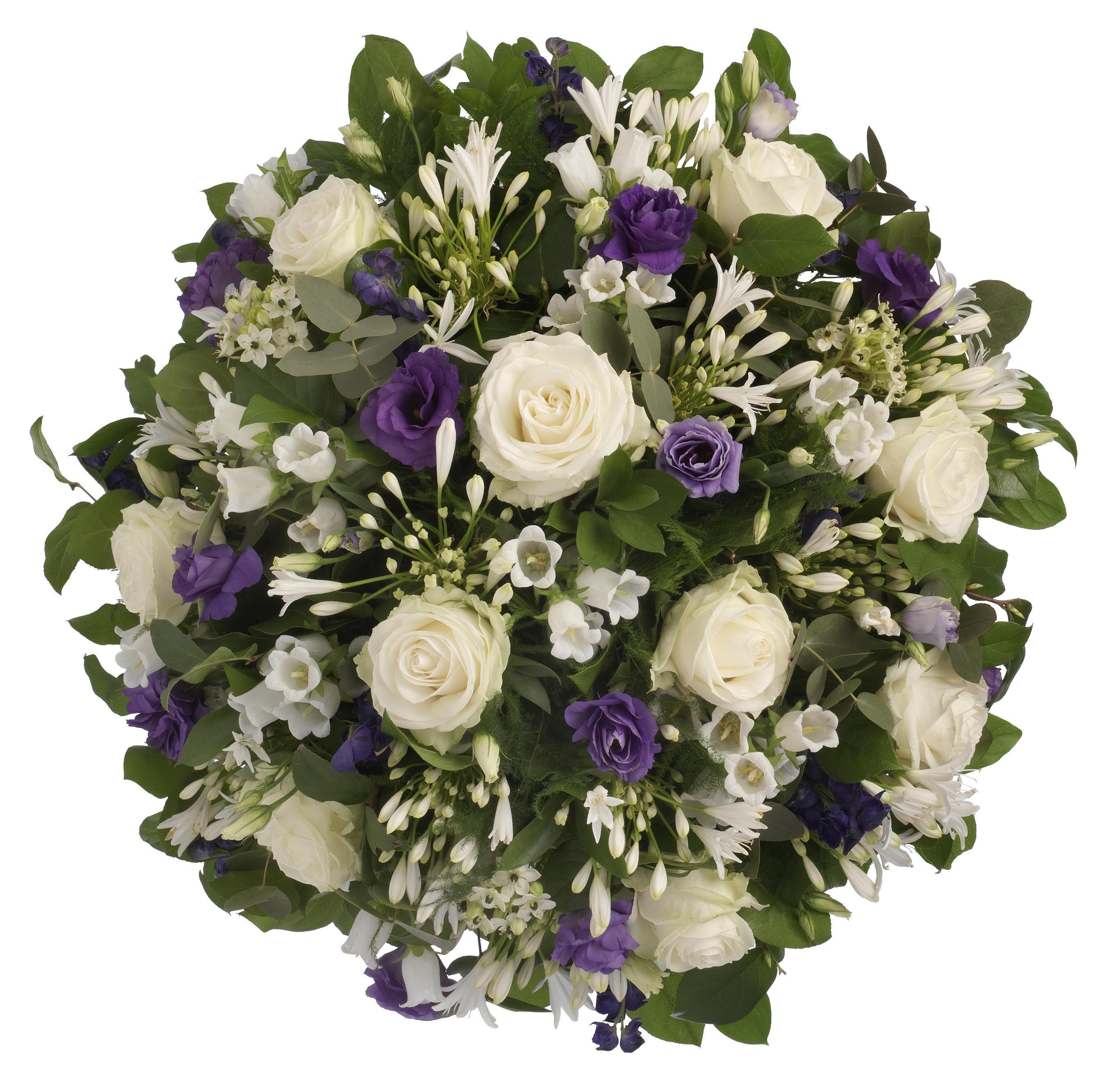 Rouwbiedermeier wit - paars