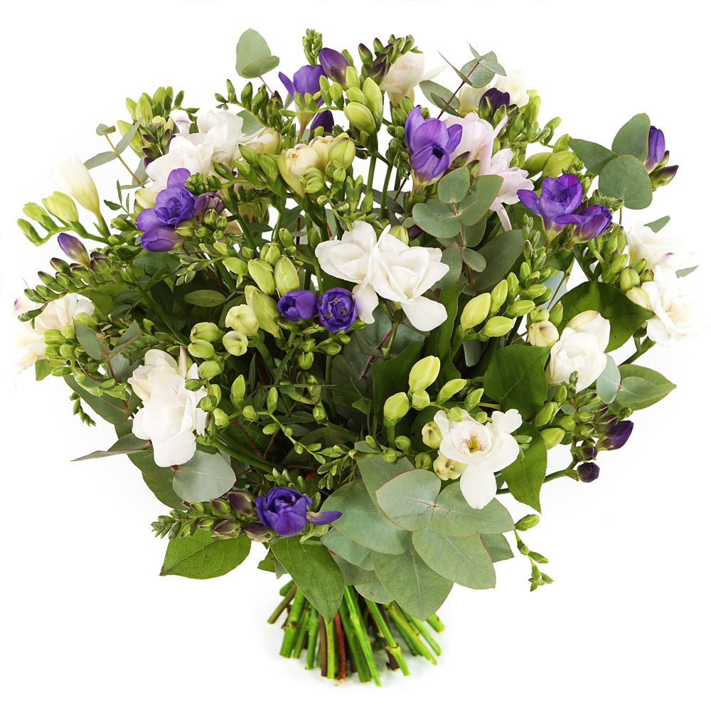 Freesia bloemen kopen Koopje