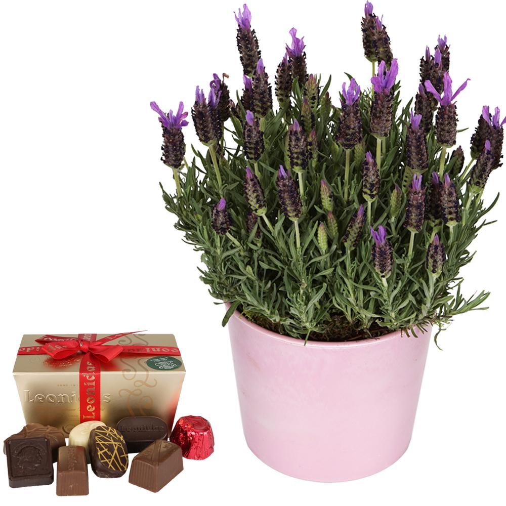 Moederdag 2016 Lavendel en Leonidas bonbons bestellen