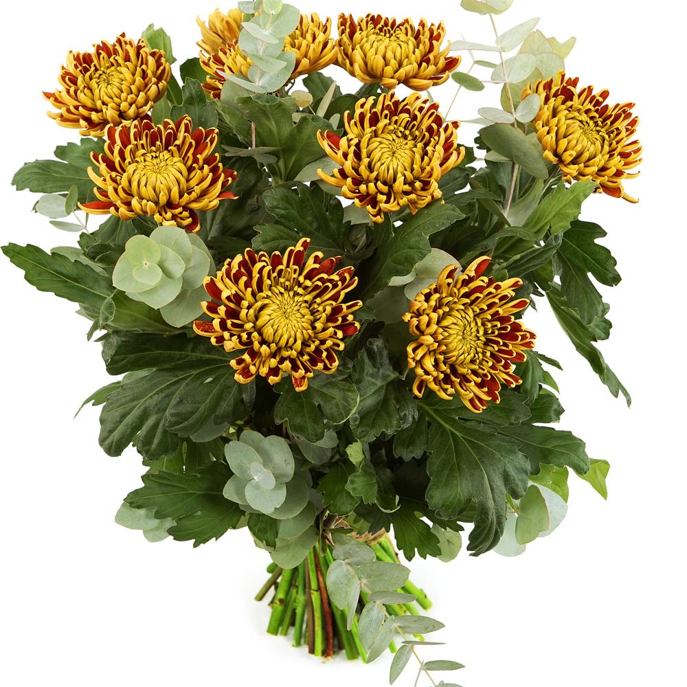 Planten Bos bloemen bolchrysanten bezorgen