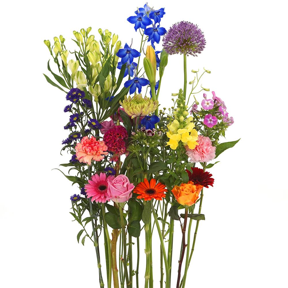 Bonte pluk bloemen om zelf te schikken