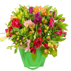 Alstroemeria mixed